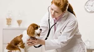 chien avec veterinaire femme